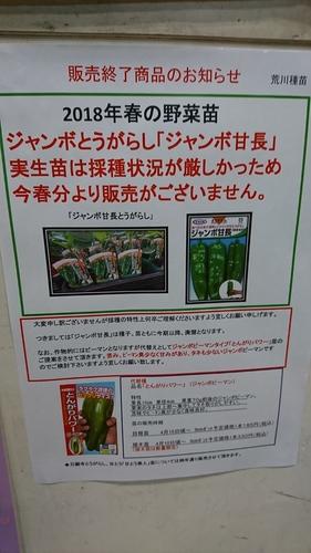 ジャンボ甘長廃盤ブログ.JPG